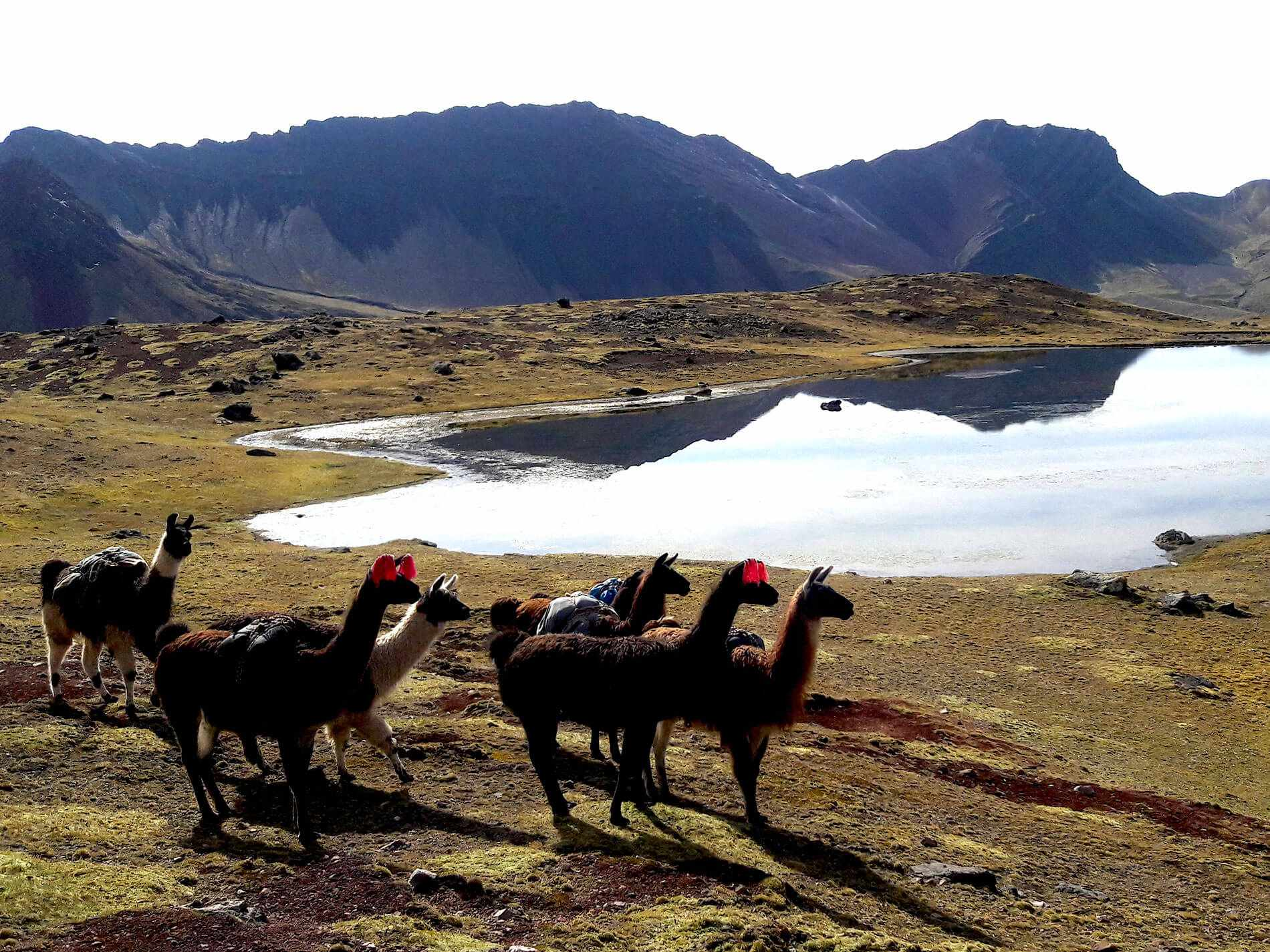 Ausangate trail to Rainbow Mountain Peru Vinicunca