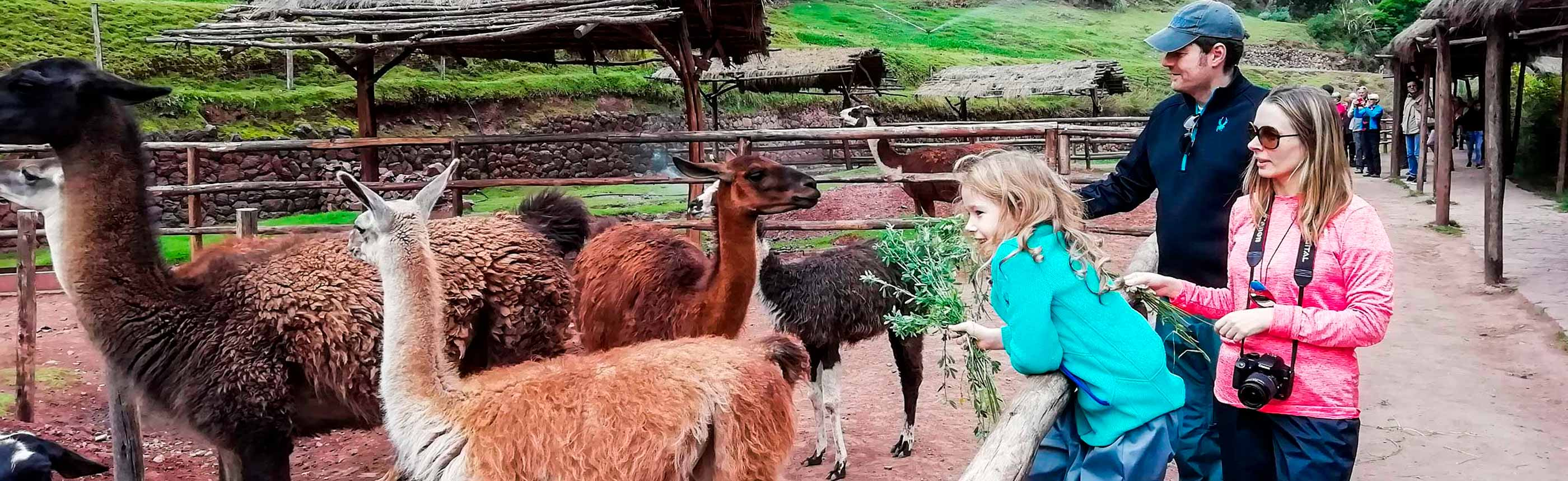 Visiting-Alpacas-Llamas-and-the-Weavers-of-Awana-Kancha
